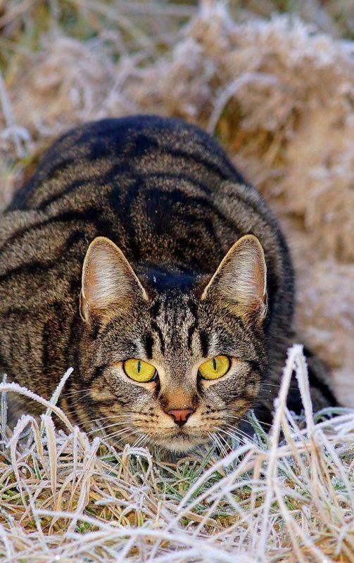 Cohabitation: Chat et biodiversité