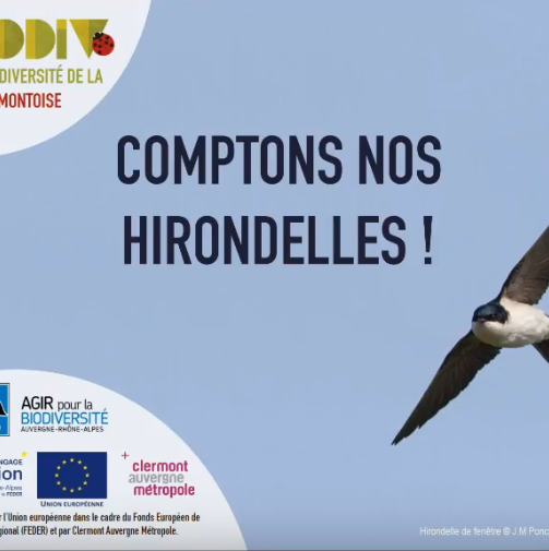 Formation «Comptons nos hirondelles»: le replay